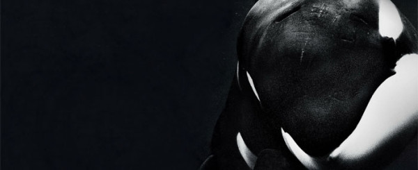 Review: SeaWorld Put on Trial in 'Blackfish'