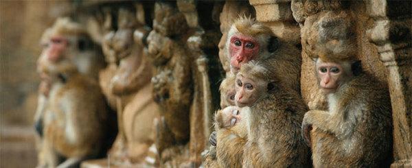 'Monkey Kingdom,' the Sociopath Detector