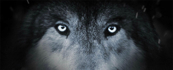 'Wolf Totem' Review: Because Wolves