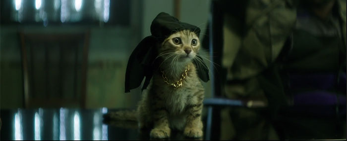 Review: 'Keanu,' a Kitten & a Cat-Loving Fiancé