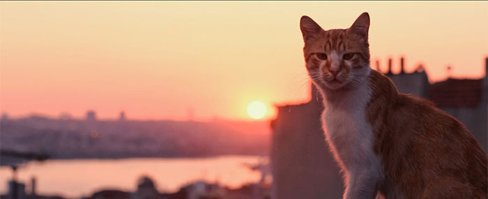 SIFF Review: If You Like Cats, You'll Love 'Kedi'