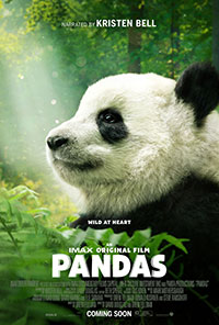 Pandas preview